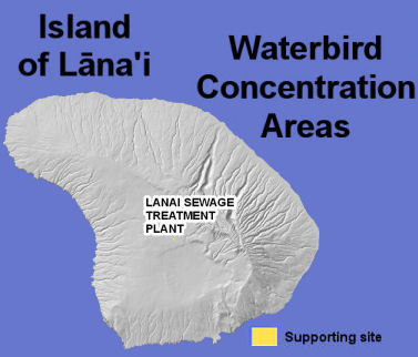waterbirds lanai