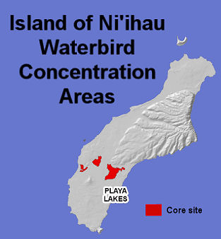 waterbirds niihau